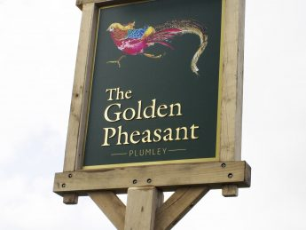 Golden-Pheasant-Pictorial